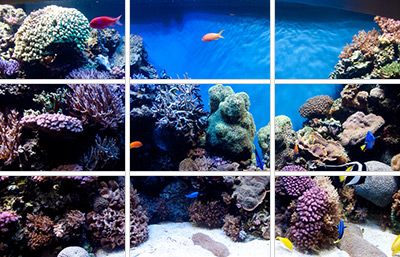 aquascaping-rule-of-thirds1