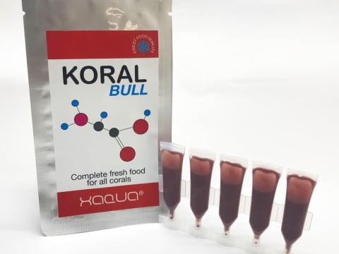 koral-bull
