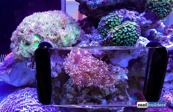 maxspect-fragnifier-coral-viewer-3_grande