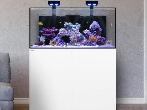 display-reef