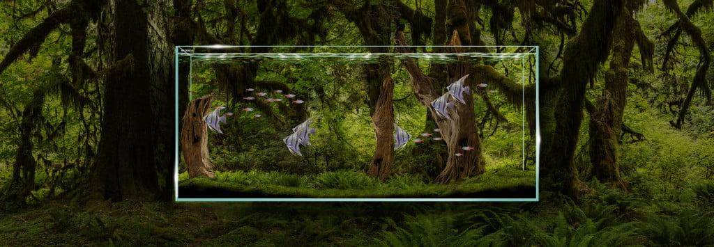 Clear.Jungle