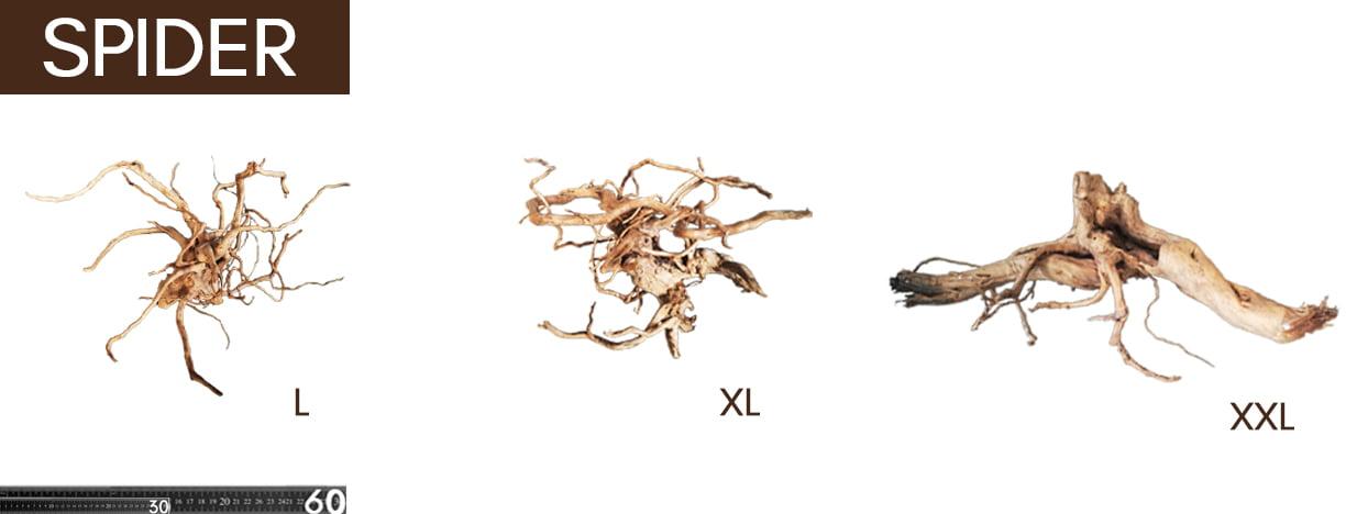 Spider Comparativa
