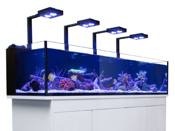 acuario-hydra-e1521562413279.jpg