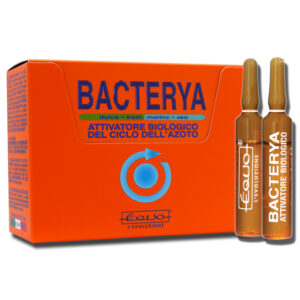 bacterya_12f-300x300.jpg